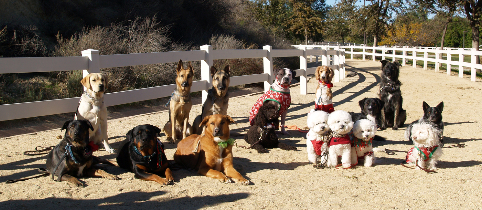 Time4Obedience_group_picture